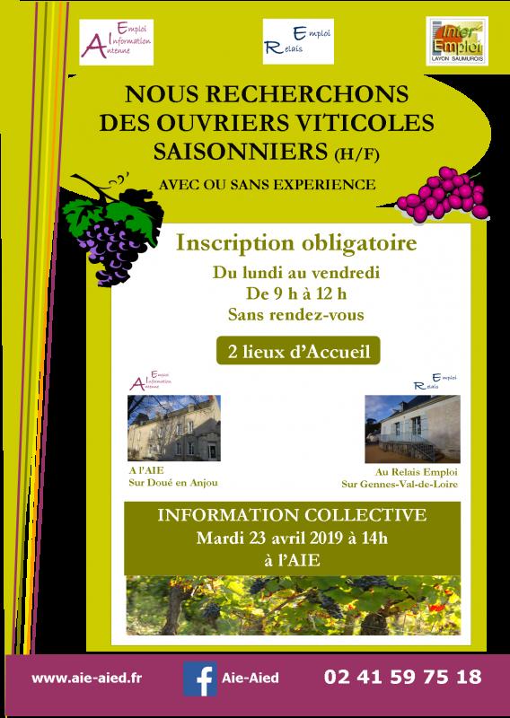 Nous recherchons des ouvriers viticoles saisonniers info coll ebourgeonnage jpg